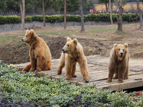 【主题乐园】常州淹城野生动物园纯玩1日游 天天发班>
